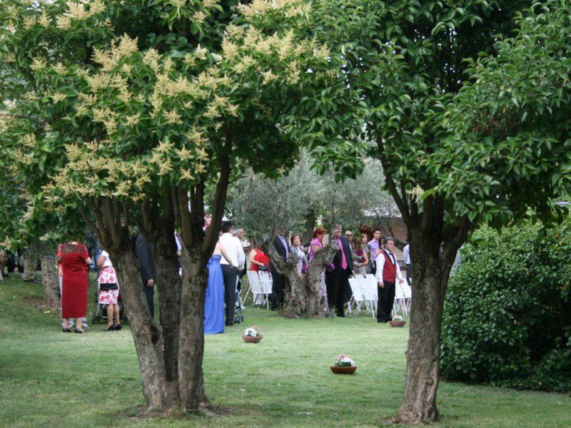 Eventos Los Olivos Getafe 6